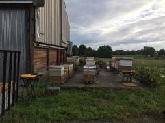 Bee Yard Laraland, MD