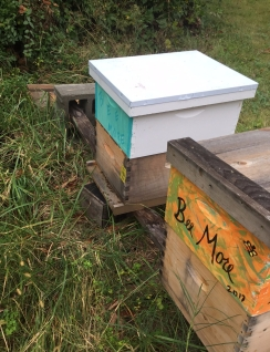 bee hives 10/12/17
