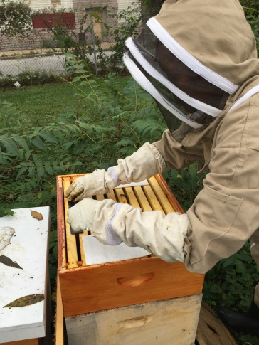 Inserting the hive beetle trp