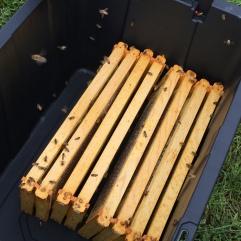 Storing the honey fames