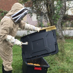 Getting rid of the bees from the box