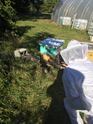 Floyd checking out the hive before helping me feed
