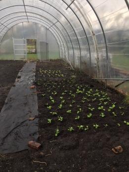 Beginnings of greenhouse 2